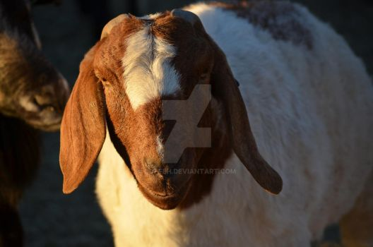 Goat. by CoFFeH