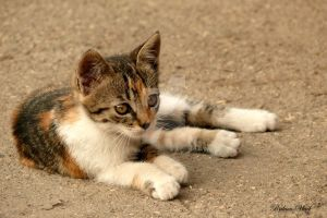 baby cat 2 by black-eaglet