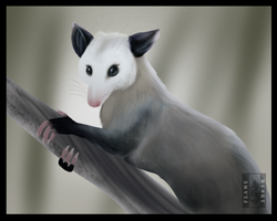 Virginia Opossum by Husky-Foxgryph