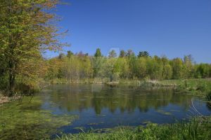 Orillia Ontario Swamp by ryanhacking