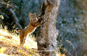 Tree Hugger full by kayaksailor