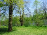 Trees, Grass, River Stock by EpicQuality