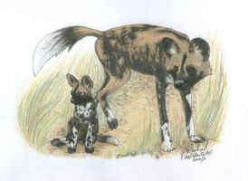 African Wild Dogs by NightTracker