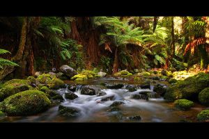 Tasmanian Forest by CainPascoe