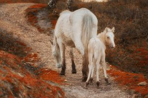 New Forest Pony and Foal by Grovelight