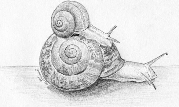 snails by MonaLisaSmile23