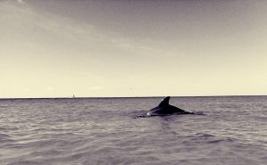 The Retro Dolphin by WadeCreativeSuite