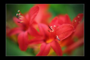 So Red by Woz1