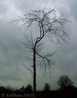 Winter Tree and Clouds III 005 by Eolhin