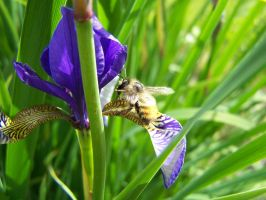 Iris and Bee by ByronGiant