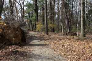 A-clean-trail-in-Trumbull-CT-kept-by-fastidious-re by WintersBrosCT
