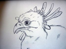 secretary bird by zer0starX