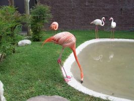 Flamingo Community by sognidolci