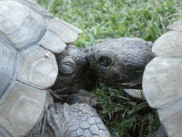 Tortise Kiss by Jessicaxcore