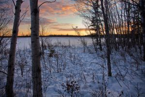 Wild Winter Forest by Thomas-Koidhis