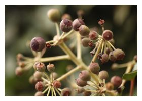 the latent Bud by tom2strobl