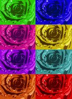colourful flowers by marmarlaid