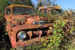 Old Ford truck in bushes by finhead4ever