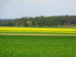 yellow spring #3 by Mittelfranke