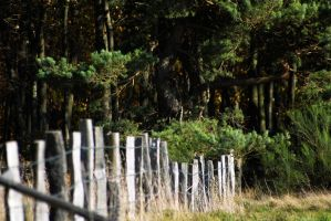 fenceposts 'n pine by stupidduck