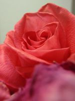 Roses are Red by SayTunaFeesh