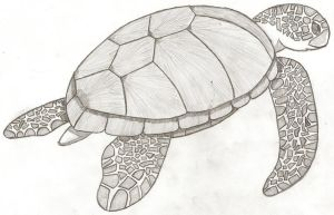Turtle, Turtle... Sketch by Psybreon