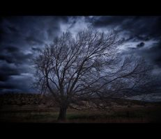Ellensburg tree by Circusdog