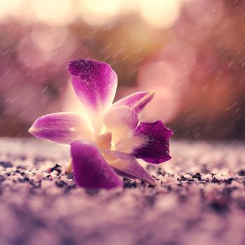 Fell from Heaven by arefin03