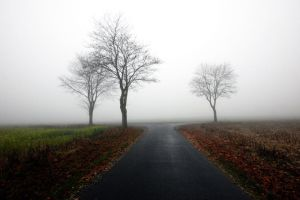 three trees by augenweide