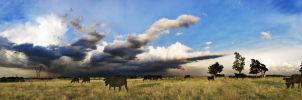 Cows and Clouds by EdIsOnFire