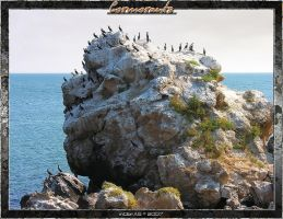 Cormorants 1.2 by inObrAS