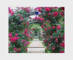 Rose Arches Stock by ValerianaSTOCK