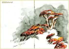 fly amanita by Iraville