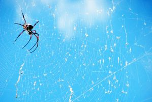 Web Mistress by andotsiry