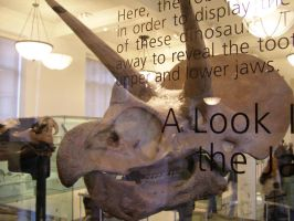 Triceratops Under Glass by gracesix