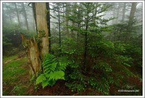 Foggy Trees Wide View by TRBPhotographyLLC