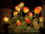 Yellow Red roses. by Bermiro
