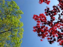 Red and Green in the Spring by bodhi48
