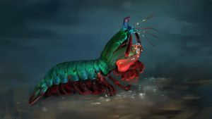 Peacock Mantis Shrimp - Photo Study by KhoaSV