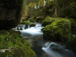 moss and water 2nd by Burtn