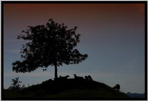Sheep on a Hill by Megglles