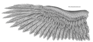 Grey Eagle Wing by K1ku-Stock