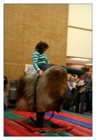 Bull Riding II by Astraea-photography