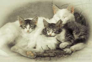 Cat's family by PiraWTH