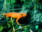 Newt 3 by Champineography