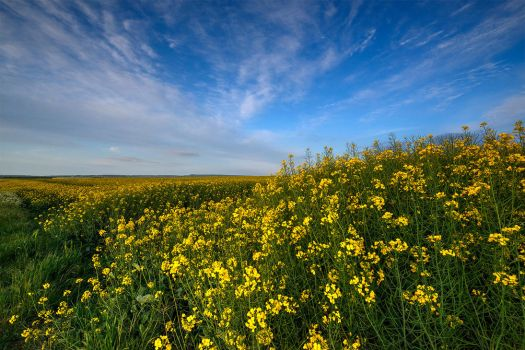 Colors of Spring in Normandy by Jean-Baptiste-Faure