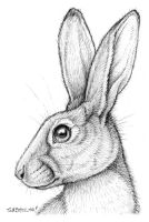 Belgian Hare for Thaily by synnabar
