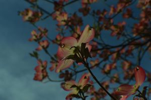 Washed in the Spring sunshine by jena4renna