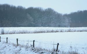 Snow Covered Meadow by Danimatie