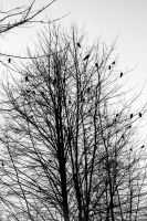 crows party II by davidst123
